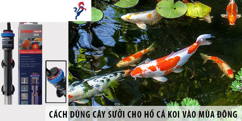Cách sử dụng cây sưởi cho hồ cá Koi vào mùa đông