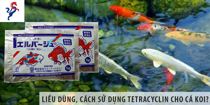 Liều dùng, cách sử dụng tetracyclin cho cá koi?